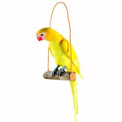 Perroquet sur balançoire 65 cm