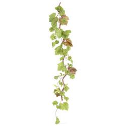 Branche de vigne...