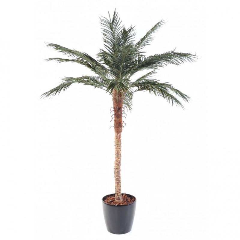 """Palmier """"Phoenix"""" en pot hauteur 210 cm"""