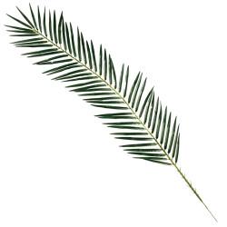 Feuille de Palmier artificielle 110 cm