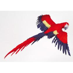 Perroquet volant  98 x 80 cm